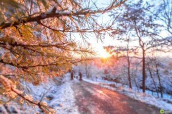 Böhmische Winterboten