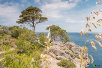 Mallorca im Mai